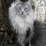 Zaza in her fav tree