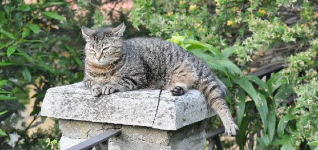 Finding solutions for the best garden cat proofing