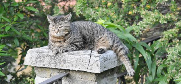 Finding-solutions-for-the-best-garden-cat-proofing