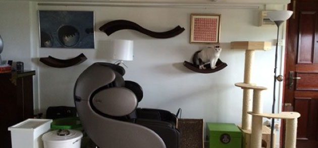 Ideas-to-catify-your-home