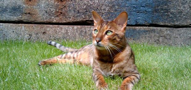 In-door cat V's outdoor cat