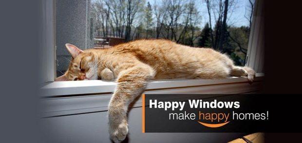Keeping your in-door cat safe