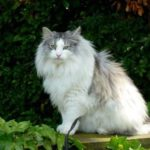 Cat expert UK