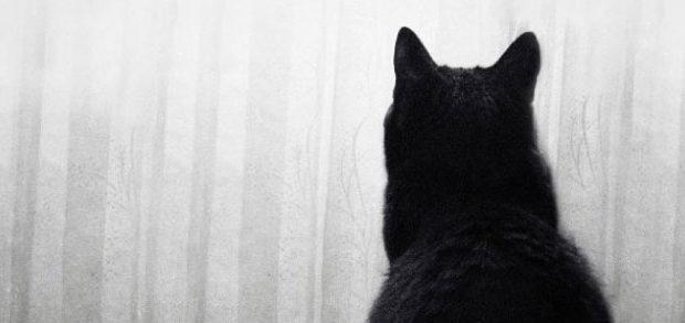 Stimulation for the indoor cat
