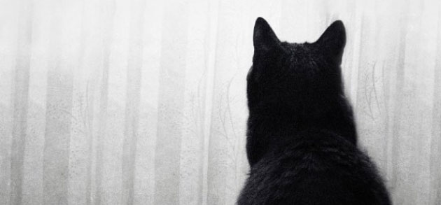 Stimulation-for-the-indoor-cat