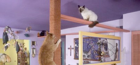 The Importance of a cat tree in the home