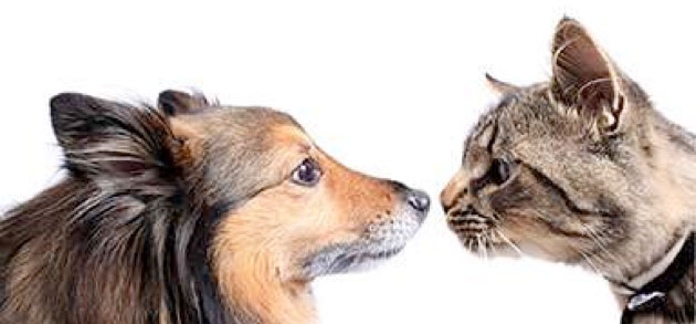 Understanding-what-your-cat-is-trying-to-say