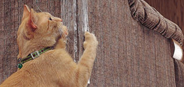 Why do cats scratch furniture
