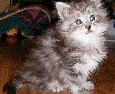 kitten grooming sessions