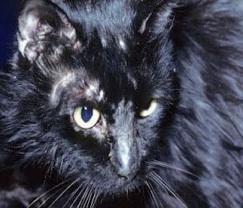 cat-behaviour-expert-birmingham