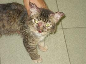 cat-behaviourist-croyden