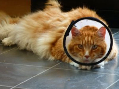 Accredited cat behaviourist testimonial: Alfie