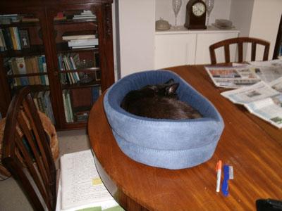 Feline behaviour consultant testimonial: Holly