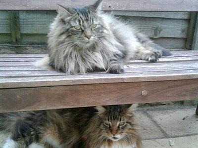 Feline behaviour practitioner  – testimonial for Missy
