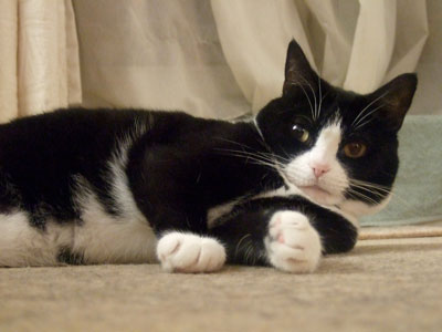 cat-behaviourist-feedback-Mittens