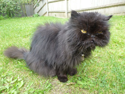 Feline behaviour expert testimonial: Noodles