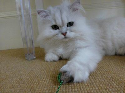 Cat Behaviour Counsellor testimonial: Sparkle