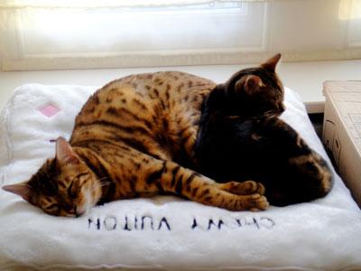 Qualified cat behaviourist testimonial: Woody and Ralph
