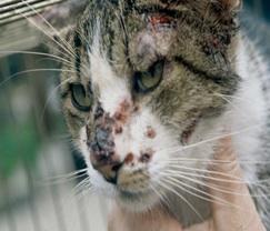 cat-behaviourist-maidstone