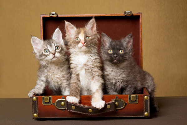 Caring for your cat when you have to travel