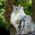 Zaza in the Park