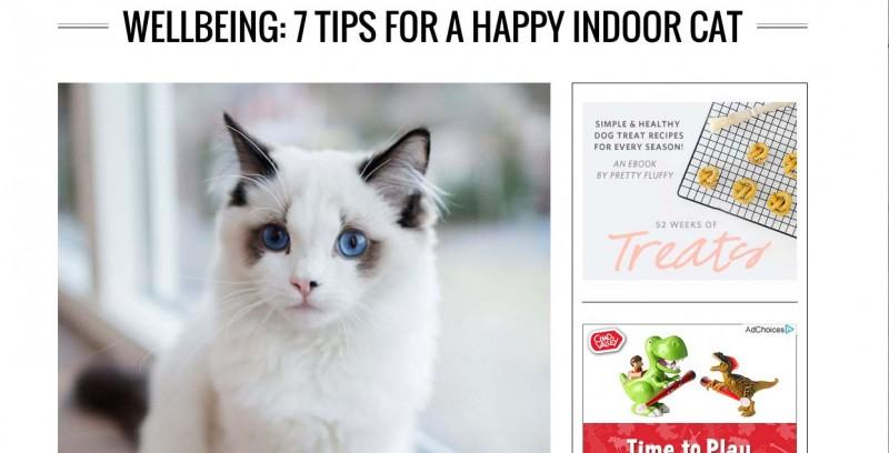 London cat behaviourist
