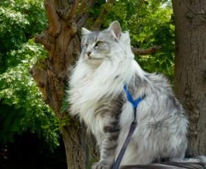 cat expert London
