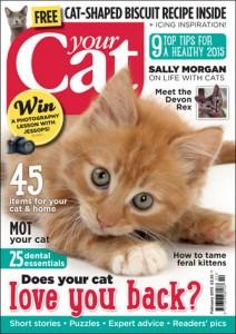 Anita kelsey cat behaviourist
