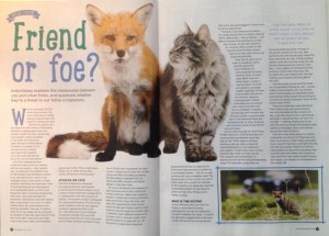 my fox article image