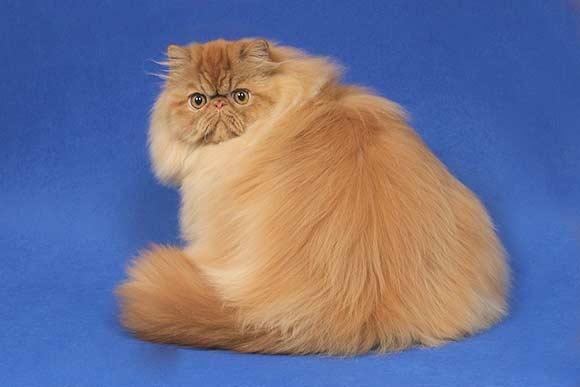 Understanding cat behaviour during grooming
