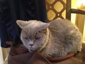 holistic mobile cat groomer