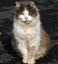 Do cats need bathing?
