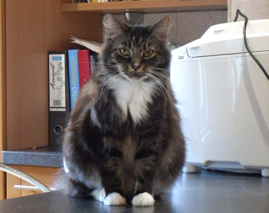 Cat behaviour testimonial Harrow
