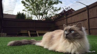Cat Behaviourist Anita Kelsey