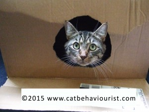 photo image - cat sitting in a box