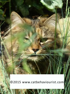 image library - cat playing in the grass