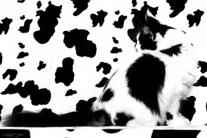 expert cat doctor