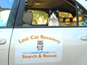 interview with cat detective Kim Freeman