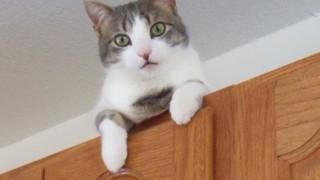 london bridge cat behaviour consultation