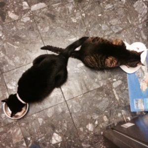 cat-behaviour-consultant-London