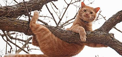 the Importance of climbing for indoor cats