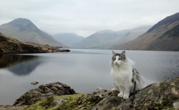 cats in the Lake District