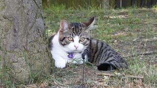 cat behaviour testimonial East London