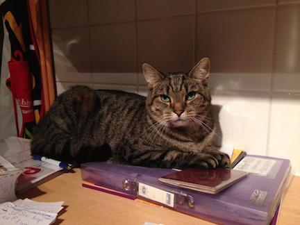 Vet referred cat behaviour consultancy