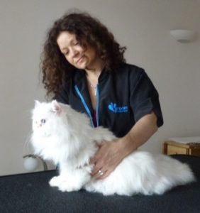 are cats less stressed having examination at vets or home?
