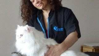 are cats less stressed having a veterinary examination at home?