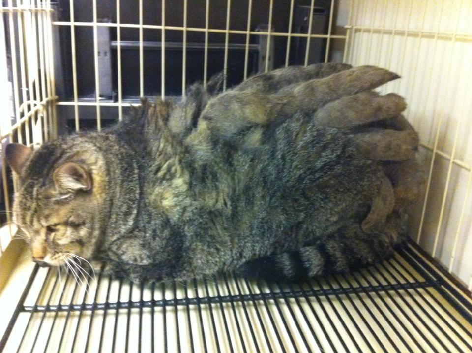 Remarkable, geriatric cats fur grows back shaved think
