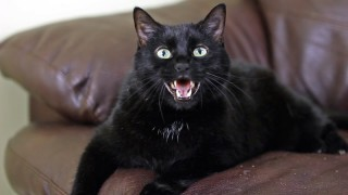 HOW TO CHOOSE THE RIGHT CAT BREED