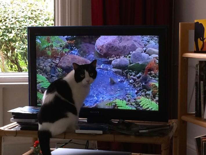 cat behaviour consultation Harrow