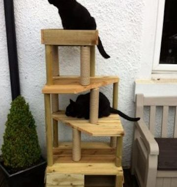 cat behaviour testimonial from cat climbing towers